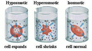 Cells.3